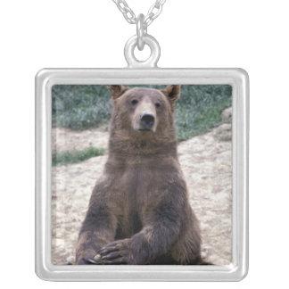 Colar Banhado A Prata Alaska, Ursus do sudeste do urso de Brown da