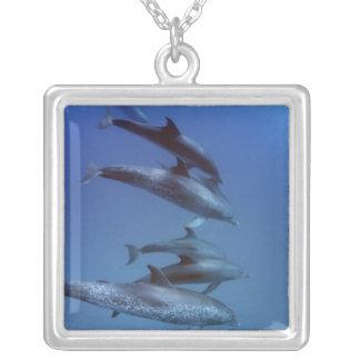 Colar Banhado A Prata Atlântico manchou golfinhos. Bimini, Bahamas.