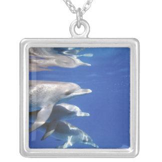 Colar Banhado A Prata Atlântico manchou golfinhos. Bimini, Bahamas. 10