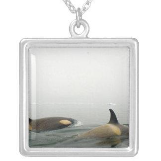 Colar Banhado A Prata baleias de assassino (orcas), orca do Orcinus,