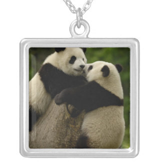 Colar Banhado A Prata Bebês da panda gigante (melanoleuca do Ailuropoda)