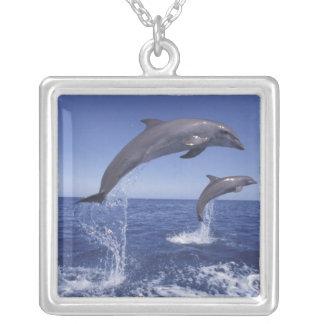 Colar Banhado A Prata Caribe, Tursiops 3 dos golfinhos de Bottlenose