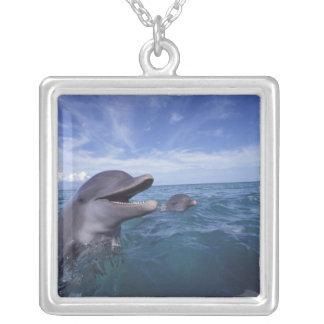 Colar Banhado A Prata Caribe, Tursiops 5 dos golfinhos de Bottlenose