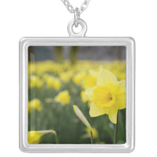 Colar Banhado A Prata Daffodils (RF)