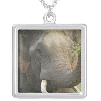 Colar Banhado A Prata Elefante indiano/asiático que indica a comida,