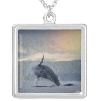 Colar Banhado A Prata EUA, Alaska, Angoon, Megaptera da baleia de
