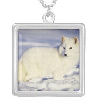 Colar Banhado A Prata EUA, Alaska. Raposa ártica no casaco do inverno.