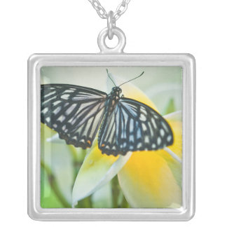 Colar Banhado A Prata EUA, Pensilvânia. Borboleta de Swallowtail