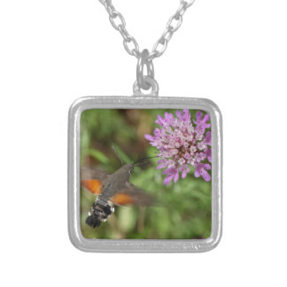 Colar Banhado A Prata Falcão-traça do colibri (stellatarum de