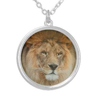 Colar Banhado A Prata Fim majestoso do leão de África do Sul acima