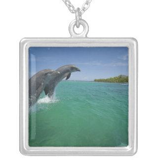 Colar Banhado A Prata Golfinhos de Bottlenose (truncatus do Tursiops)