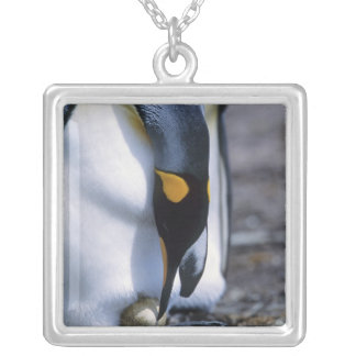 Colar Banhado A Prata Ilhas Falkland. O pinguim de rei tende o único ovo