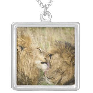 Colar Banhado A Prata Kenya, Masai Mara. Fim-acima de um leão masculino