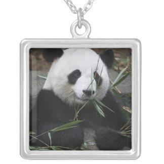Colar Banhado A Prata Pandas gigantes na proteção da panda gigante &