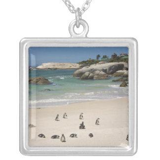 Colar Banhado A Prata Pinguins na praia dos pedregulhos, cidade de