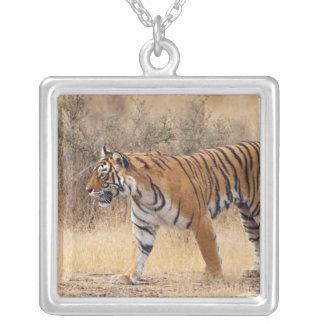 Colar Banhado A Prata Tigre de Bengal real que anda em torno de seco