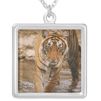 Colar Banhado A Prata Tigre de Bengal real que sai da lagoa da selva,