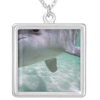 Colar Banhado A Prata Truncatus) do Tursiops dos golfinhos de Bottlenose
