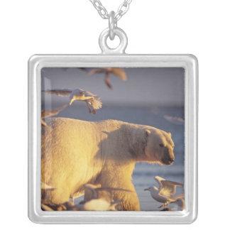 Colar Banhado A Prata urso polar, maritimus do Ursus, com