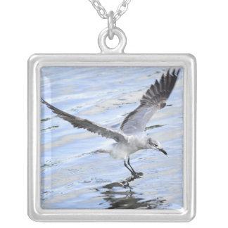 Colar branca bonita do vôo da gaivota