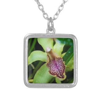 Colar verde da orquídea