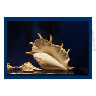 Coleção de Shell Cartão De Nota