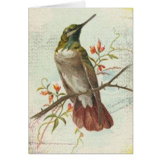 Colibri do vintage, aniversário cartão