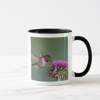 colibri Largo-atado, Selasphorus 2 Caneca