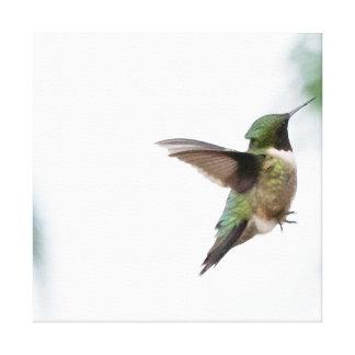 Colibri Rubi-throated do pássaro Impressão Em Tela