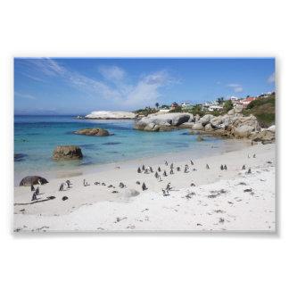 Colônia do pinguim na praia dos pedregulhos, impressão de foto