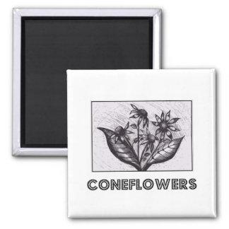 Coneflowers Ima