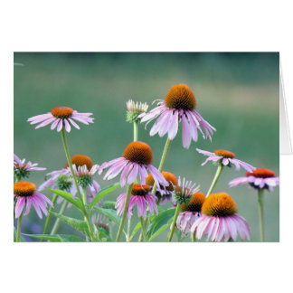 Coneflowers roxos! cartão comemorativo
