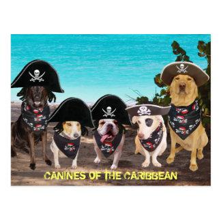 Conversa engraçada dos cães como cartão de um dia cartao postal