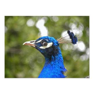 Convite azul do retrato do pavão