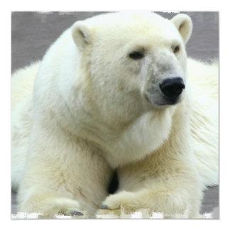 Convite do urso polar