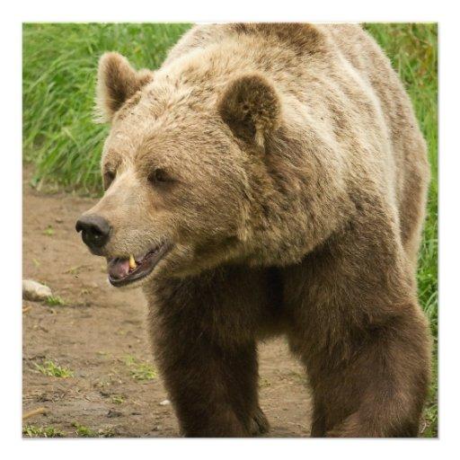 Convites do urso