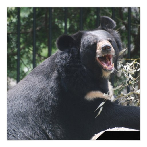 Convites do urso da rosnadura