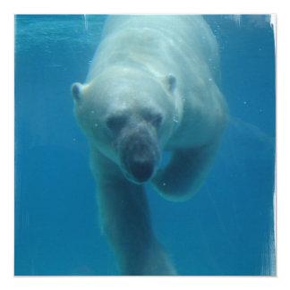 Convites nadadores do urso polar