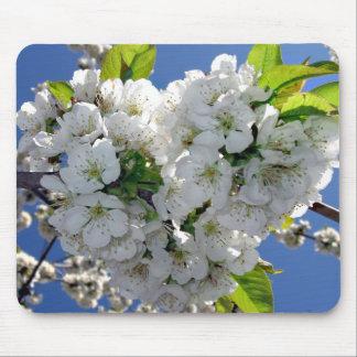 Coração da flor de cerejeira mouse pads