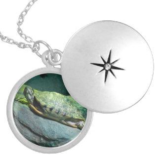 Coração da tartaruga colar medalhão