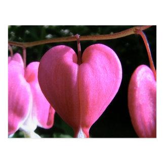coração de sangramento cartão postal
