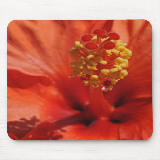 Coração de uma flor alaranjada do hibiscus mouse pad