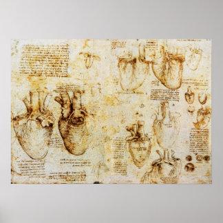 Coração e seus vasos sanguíneos poster