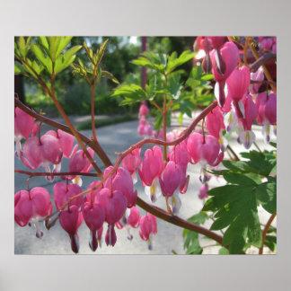 Corações de sangramento cor-de-rosa pôsteres