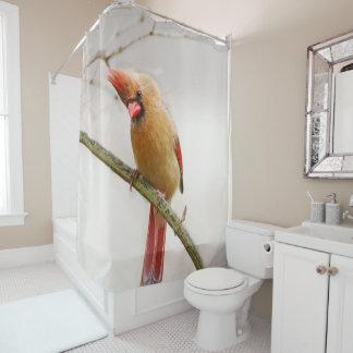 Cortina Para Chuveiro Cortina de chá cardinal fêmea curiosa