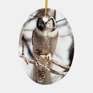 Coruja de falcão do norte 3 ornamento de cerâmica oval