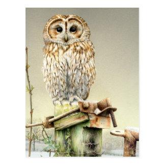 Coruja Tawny no cartão da aguarela das belas artes Cartão Postal