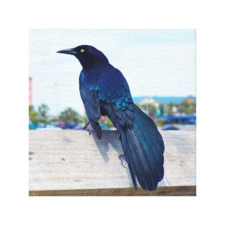 Corvo preto em um cais impressão em tela