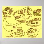 Crânios do dinossauro posters