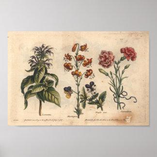 Cravo botânico do impressão da arte da flor 1757